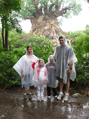 Raindrops the size of small pancakes at Disney's Animal Kingdom.