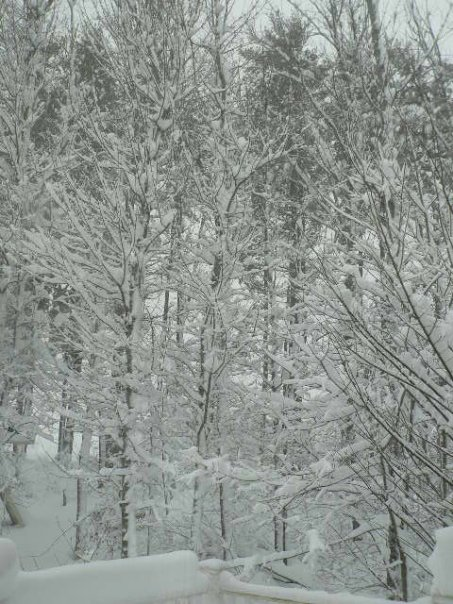 Snow. Photo Credit: Kathy Binder.