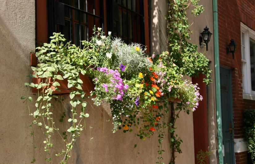 FlowerBoxes
