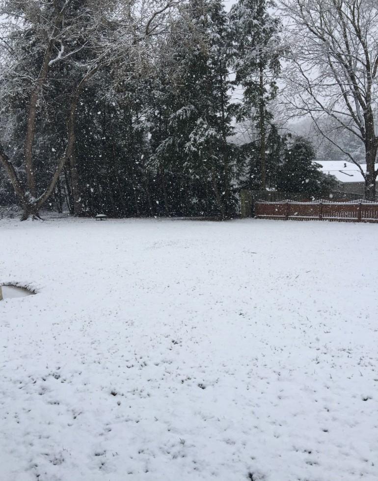 March 20, 2015. My backyard in Maryland.