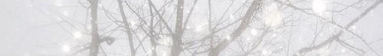 cropped-cropped-twinklelights.jpg