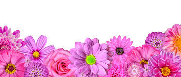 selection-various-pink-white-flowers-row-25288981